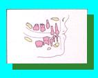 兒童牙醫-兒童乳牙恆牙